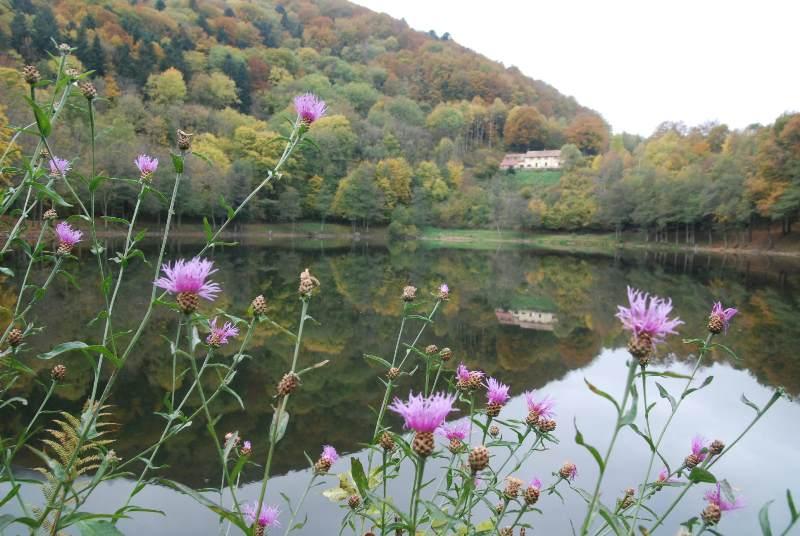 Circuit : Lac du Lachtelweiher