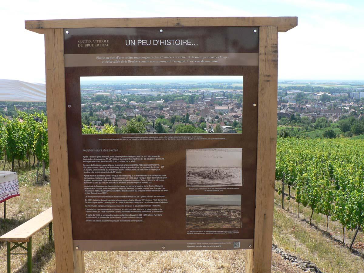 Découverte du sentier viticole du Bruderthal