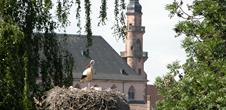 Parc à cigognes de Molsheim