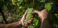 Randonnée Escapade dans le vignoble de Dorlisheim