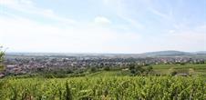 Randonnée Découverte du vignoble autour de Molsheim