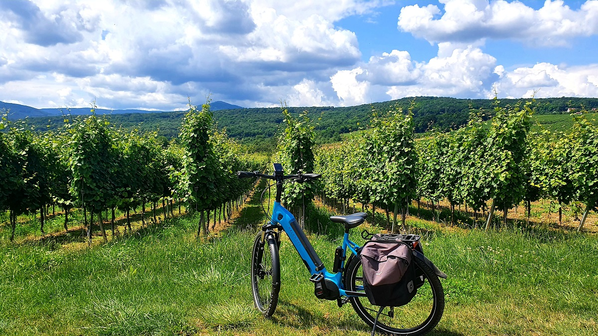 VinoRoute - Wine tours in Alsace