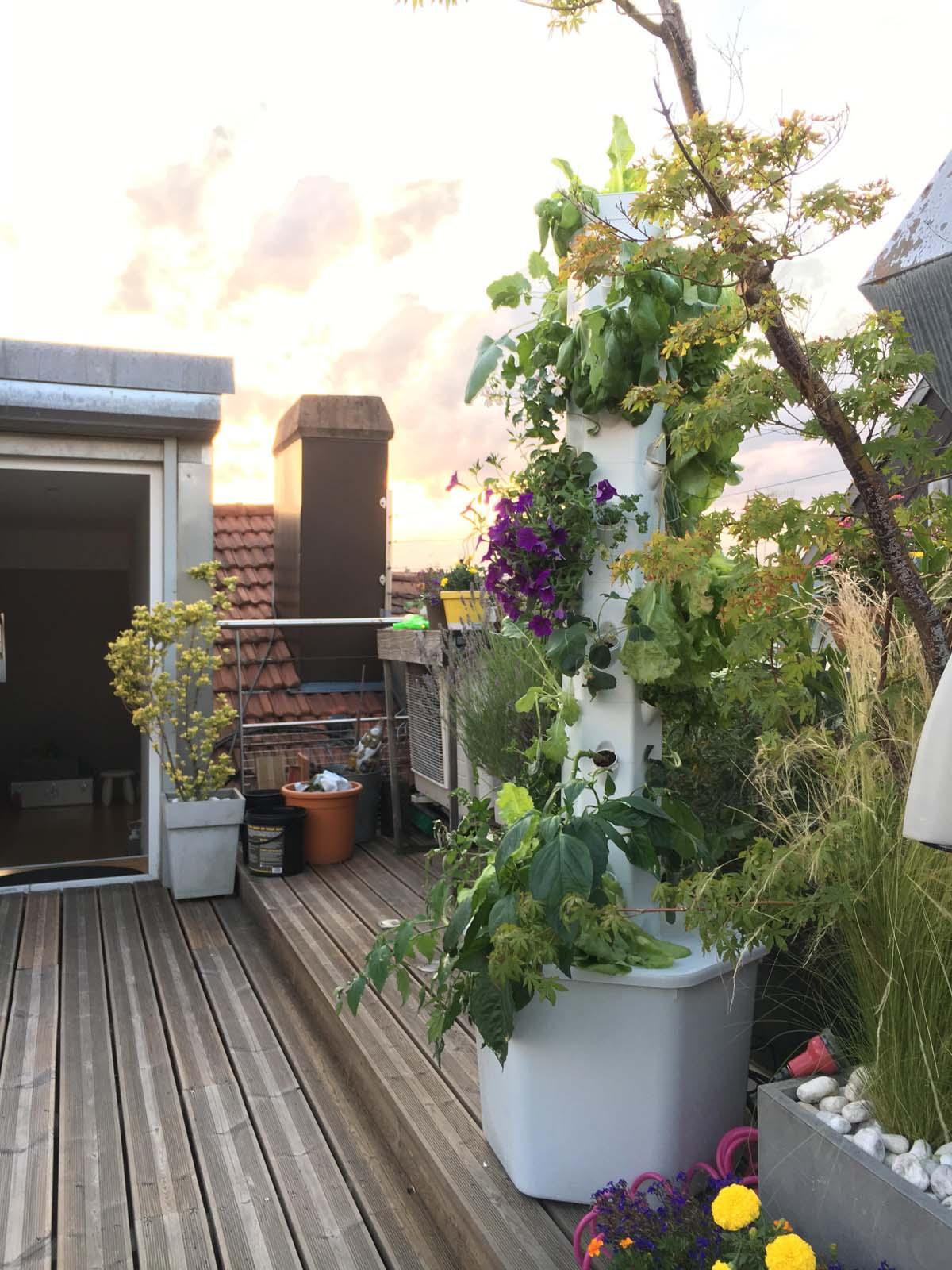 Visite commentée des jardins urbains de Myfood - Molsheim