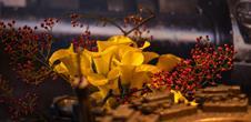 Journées d'octobre et Folie' Flore