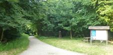 Forêt du Tannenwald