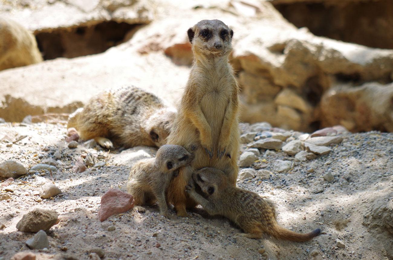 """Atelier """" Nourrir les animaux pour mieux les connaître """" au Parc Zoologique et Botanique"""