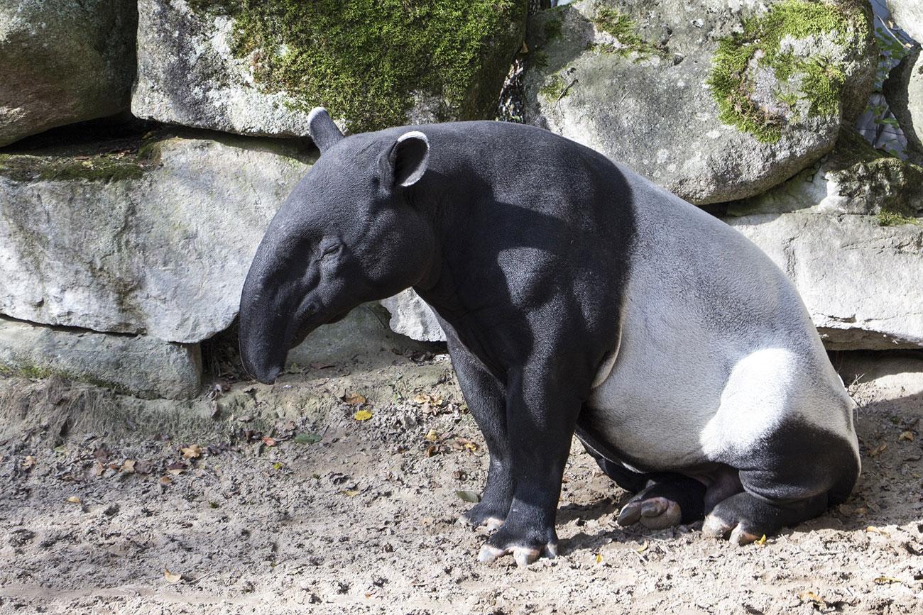 """Atelier """"A la rencontre des tapirs et des macaques"""" au Parc Zoologique et Botanique"""