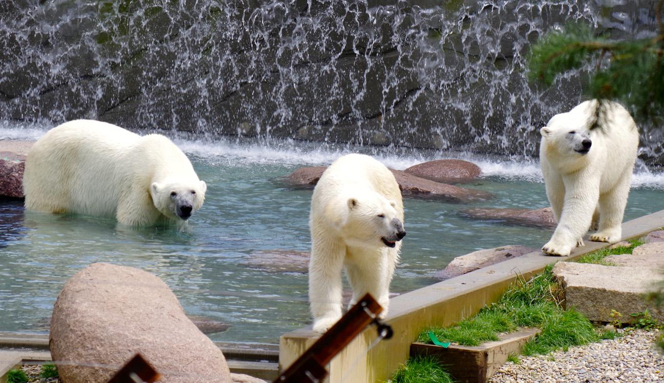 L'espace Grand Nord du Parc Zoologique et Botanique