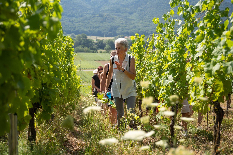 Visite commentée du vignoble, de la cave et dégustation de vins