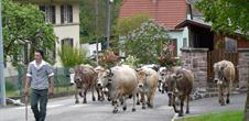 Transhumance with the Ferme Auberge Treh and Uff Rain - the ascent
