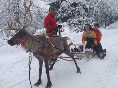 Reideer and sledge dog rearing - Chemins du Nord