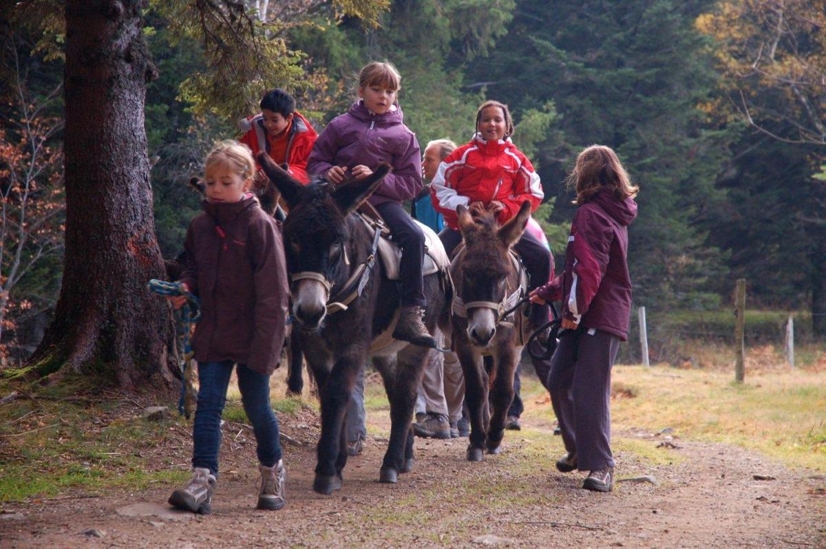 Alsace Écotourisme – Le Steinesala dans la Vallée des Géants