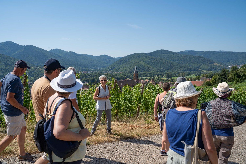 Le vignoble, refuge de biodiversité