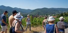 Discovery Tour: the vineyard, an ecosystem in itself