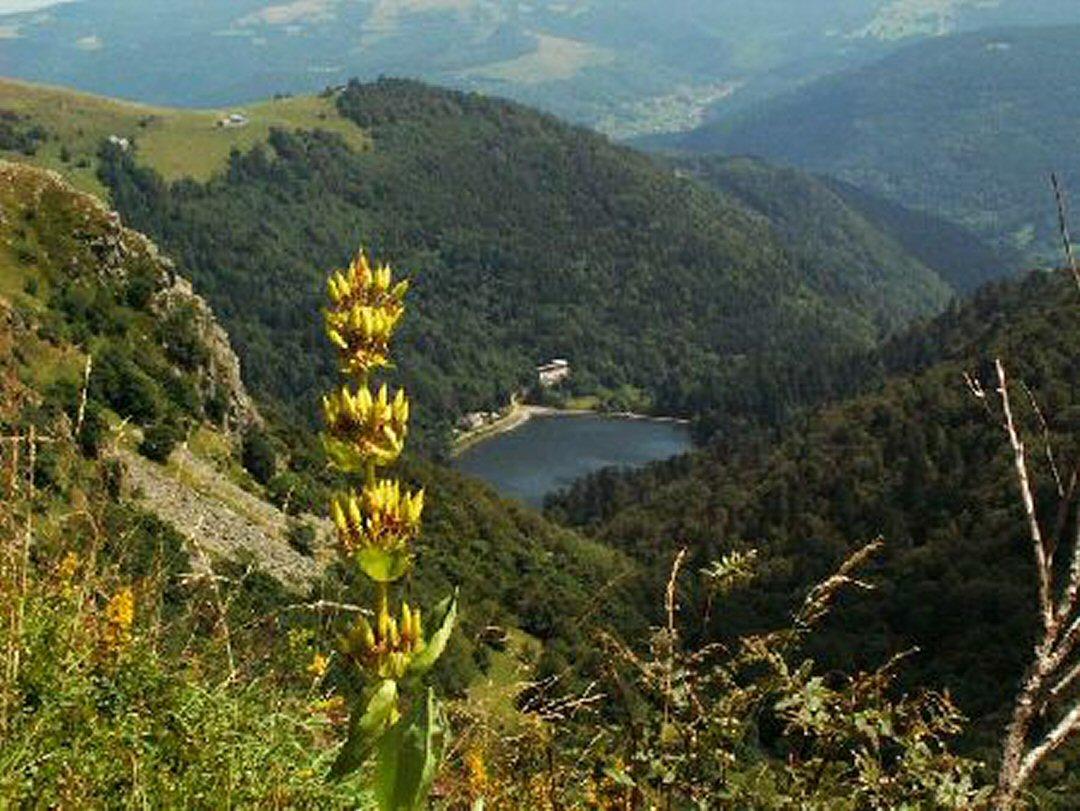 https://apps.tourisme-alsace.info/photos/munster/photos/231009205_1.jpg