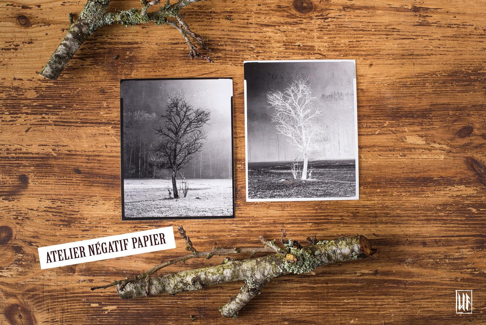 Photographie grand format 4x5 et procédé négatif papier