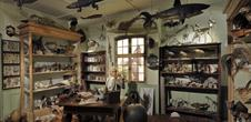 The Zoological Museum