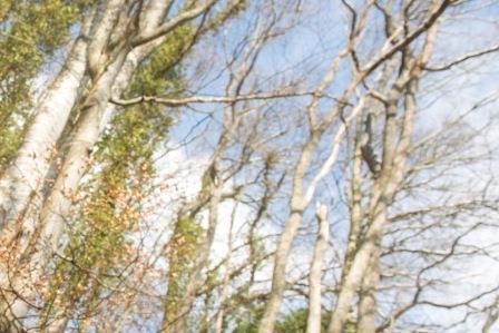 L'arbre des 5 sens©Jonathan Sarago/CD67