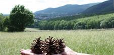 Bezoek in de streek van Niederbronn-les-Bains met een zonnige dag