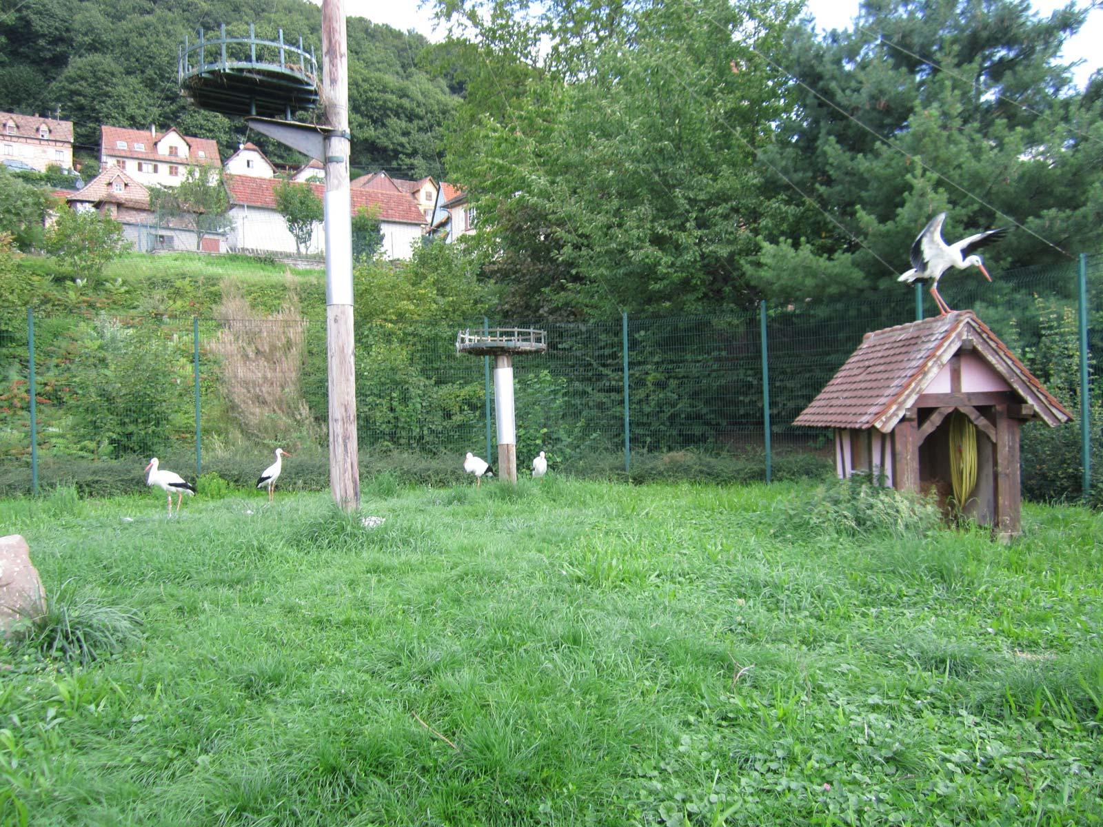 Storchgehege