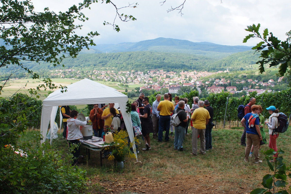 Gastronomical stroll through the Schenkenberg vineyard