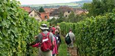 Wine trail of Bernardswiller