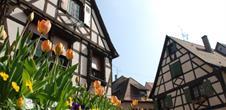 Le Printemps d'Alsace à Obernai