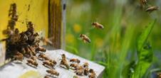 Discovering a bee-hive