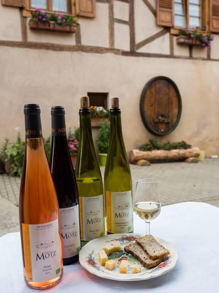 Vine - a living heritage