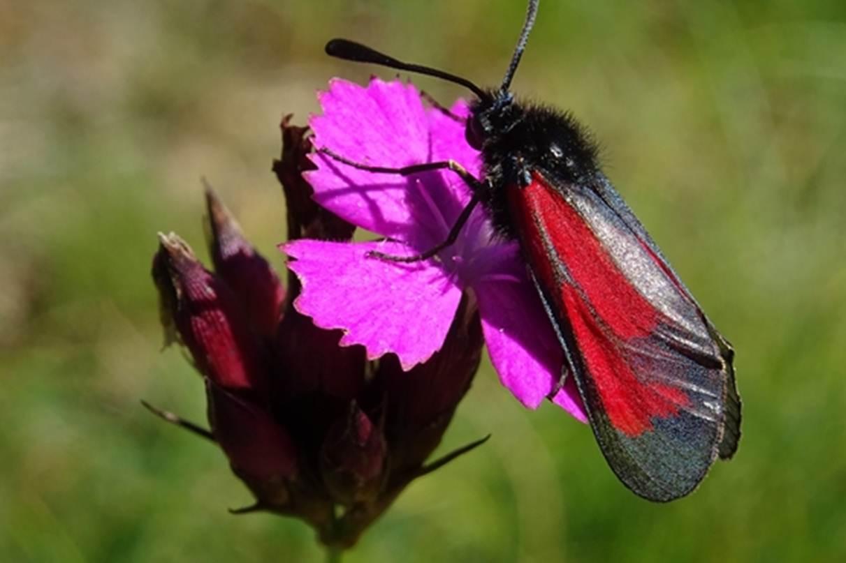 Rencontre - Insectes poètes