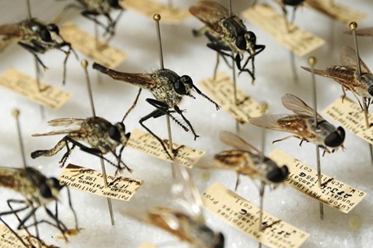 Atelier scientifique - Touche pas à mon insecte
