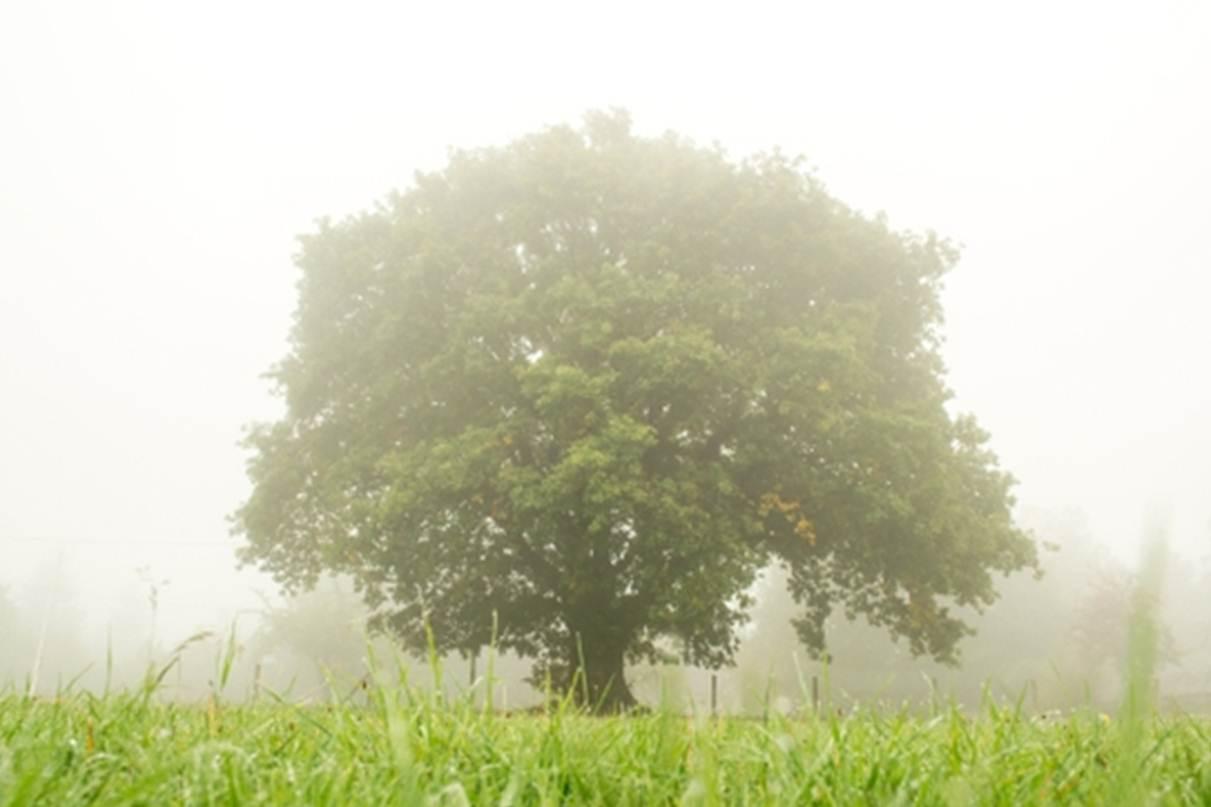 Exposition - Les arbres remarquables