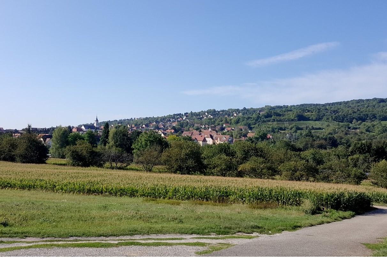 Randonnée bucolique d'Obernai vers le couvent du Bischenberg