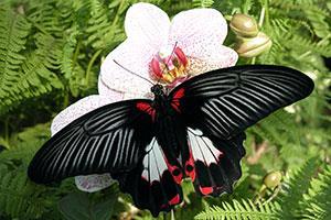 © jardin des papillons