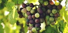 Winegrowers' evening