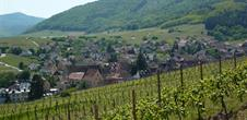 Grands Crus wine trail - Riquewihr