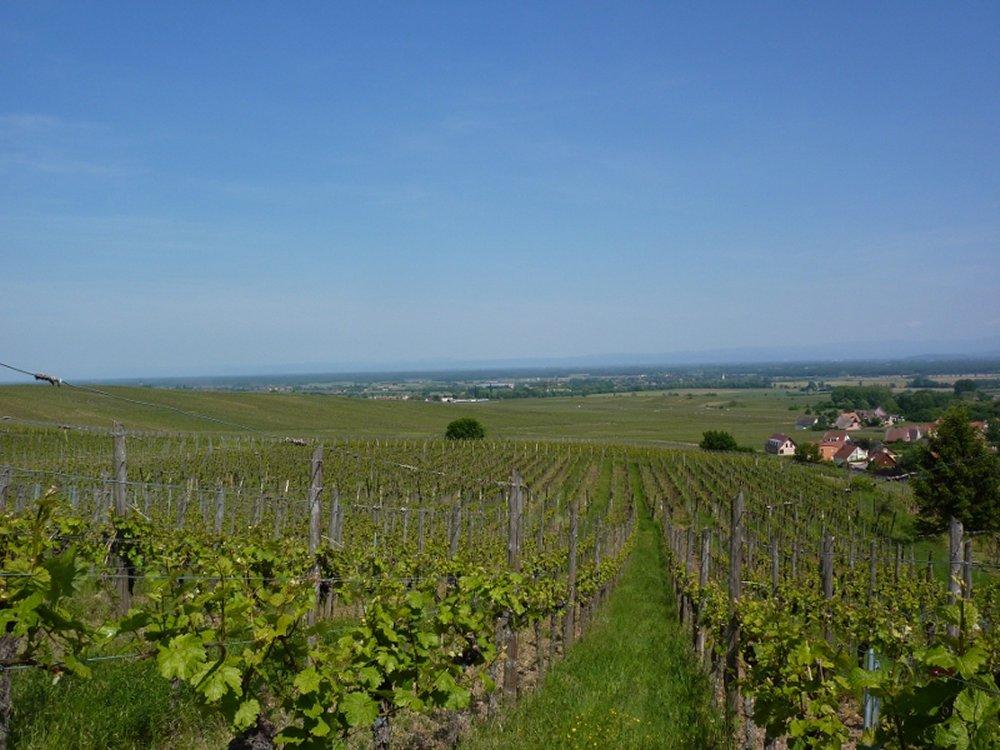 Grands Crus wine trail - Riquewihr