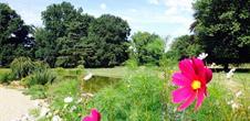 Schoppenwihr Park