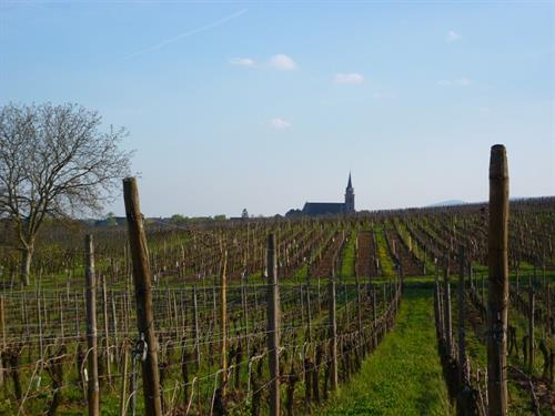 Wine trail of Bergheim