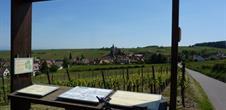 Sentier viticole des Grands Crus - Hunawihr