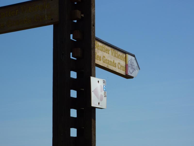 Sentier viticole des Grands Crus - Mittelwihr