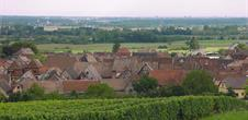 Guided tour of the Wine Trail of Bergheim