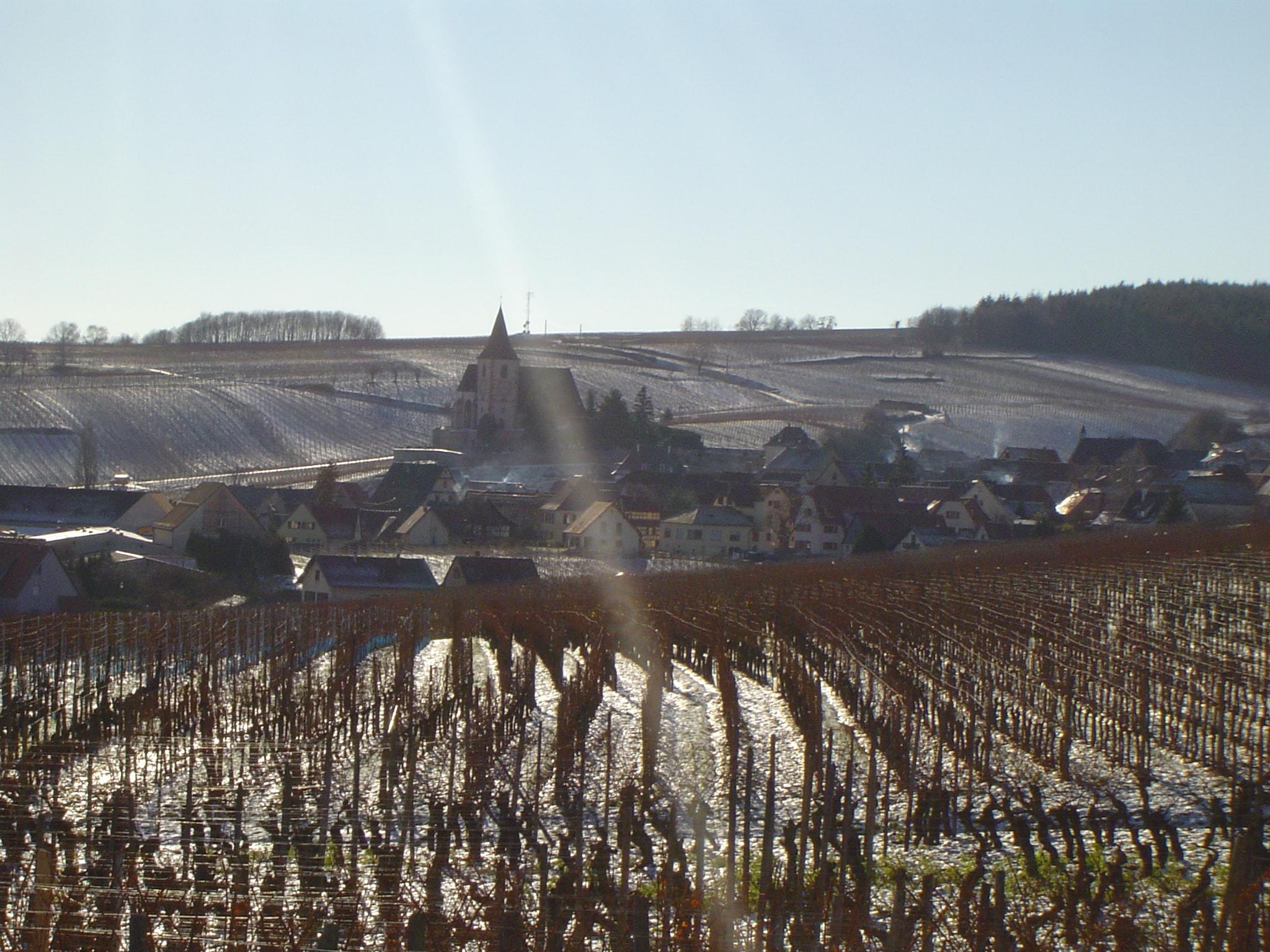 Vins d'Alsace André VIELWEBER