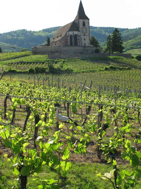 """Marche gourmande """"Vins et Saveurs"""" autour de Hunawihr"""