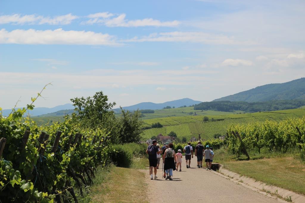 https://apps.tourisme-alsace.info/photos/ribeau/photos/229002971_1.jpg