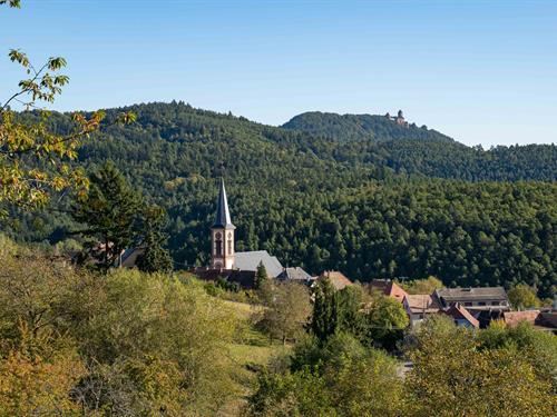 CANCELLED -Gastronomic walk around Thannenkirch
