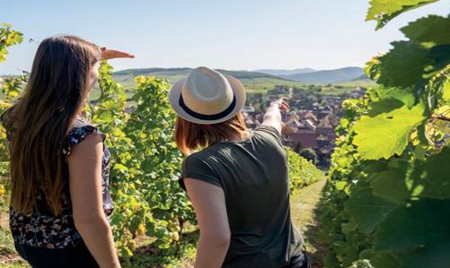 Visites commentées du Sentier viticole des Grands Crus