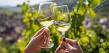 Pique-nique chez le Vigneron Indépendant d'Alsace - Pays de Ribeauvillé