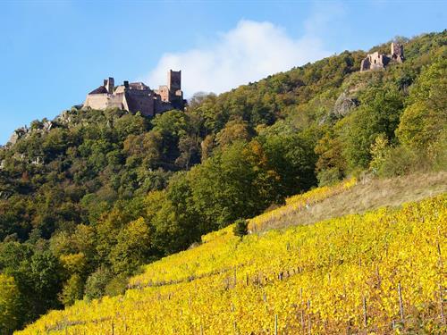 Randonnée guidée - Les 3 châteaux de Ribeauvillé