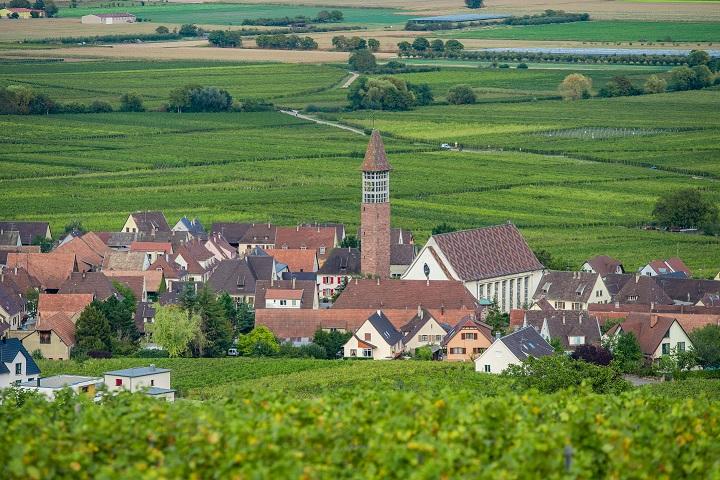 Visites commentées du Sentier viticole des Grands Crus- Nicolas KONRADT - Bennwihr